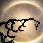 Sun halo and bird statue. — Stock Photo #58478903