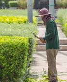 Gardener trimming plants. — Stock fotografie