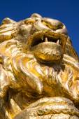 Gold  lion statues  on blue isolated — Stock Photo