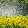 Sprinkler head watering. — Stock Photo #60847211