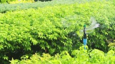 Sprinkler head watering in the garden, full HD. — Vídeo de stock