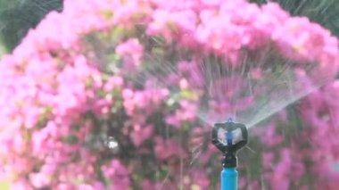 Sprinkler head watering in the garden, HD vdo. — Stock Video
