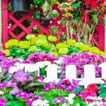 Beautiful flower garden. — Stock Photo #66885743