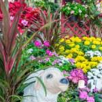 Beautiful flower garden. — Stock Photo #66886415