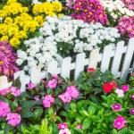 Beautiful flower garden. — Stock Photo #66886449
