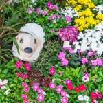 Beautiful flower garden. — Stock Photo #66886687