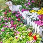 Beautiful flower garden. — Stock Photo #66890527