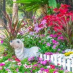 Beautiful flower garden. — Stock Photo #66890589