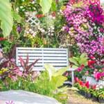 Beautiful flower garden. — Stock Photo #66890989