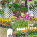 Beautiful flower garden. — Stock Photo #66891153
