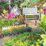 Beautiful flower garden. — Stock Photo #66892115