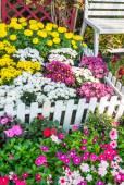 Bellissimo giardino fiorito. — Foto Stock