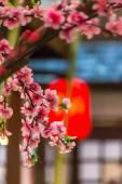 Tanabata Festival. — Stockfoto