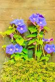 Indoor garden. — Stock Photo