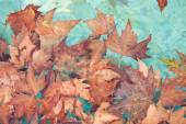 Dried autumn leaves on the water — Stock Photo