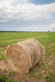 Round bales of straw on green field — Stock Photo