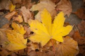 Fall leaves. Autumn background — Stock Photo
