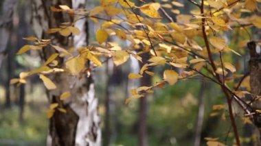 Höst i skogen — Stockvideo