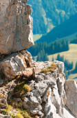 Wild mountain goat rests on a cliff in the Alps , Switzerland — Stok fotoğraf