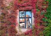 Reflection of the ancient house in the window on the wall , ivy- — Stock Photo