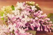 Spring flowers on a wooden background — Stok fotoğraf
