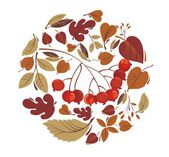 Autumn leaves with rowanberry — Stock Vector
