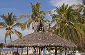 Resort palapa with palm trees — Stock Photo