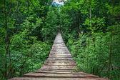 Suspension bridge in the forest — Stock Photo