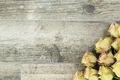 Rose backgorund — Fotografia Stock