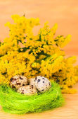 Quail eggs in the decorative nest — Foto Stock