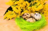 Quail eggs in the decorative nest — Stock Photo