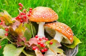 Autumn toadstool — Stock Photo