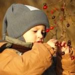 Boy collecting rosehip — Stock Photo #55720463