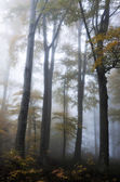 Forest on Medvednica mountain covered in autumn fog. — Stock Photo