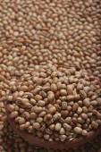 Soyabean - a legume often used like vegetable — Stock Photo