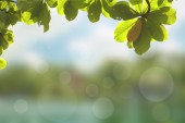 Abstract blurry green background — Stock Photo