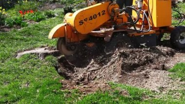 A powerful machine is used to remove a stump — Stock Video