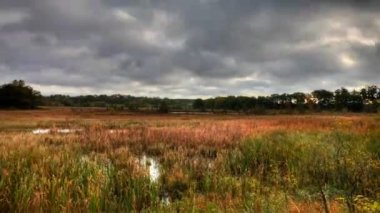 Motion Controlled pan of a marshland in autumn, a timelapse — Stock Video