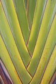Banana leaves cascaded like a blow background texture. — Stock Photo