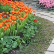 Colorful tulips and other flowers in royal park rajapruek. — Stock Photo #60297083