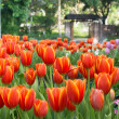 Colorful tulips and other flowers in royal park rajapruek. — Stock Photo #60297157