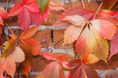 Colorful autumn leaf background — Stock Photo
