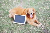 Labrador dog and Blackboard outdoors — 图库照片