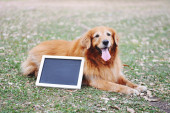 Labrador dog and Blackboard outdoors — Stock Photo