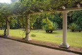 Parkway in Rio de Janeiro Botanical Garden. — Stock Photo