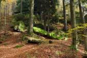 лес осенью — Стоковое фото