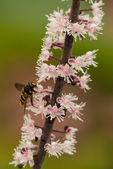 Hoverfly on flower stem — Stock Photo