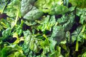 Closeup of fresh spinach — Stock Photo