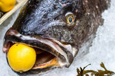 Meagre fish with a lemon in the mouth — Stock Photo