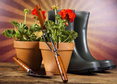 Garden boots with tool, plant — Stock Photo